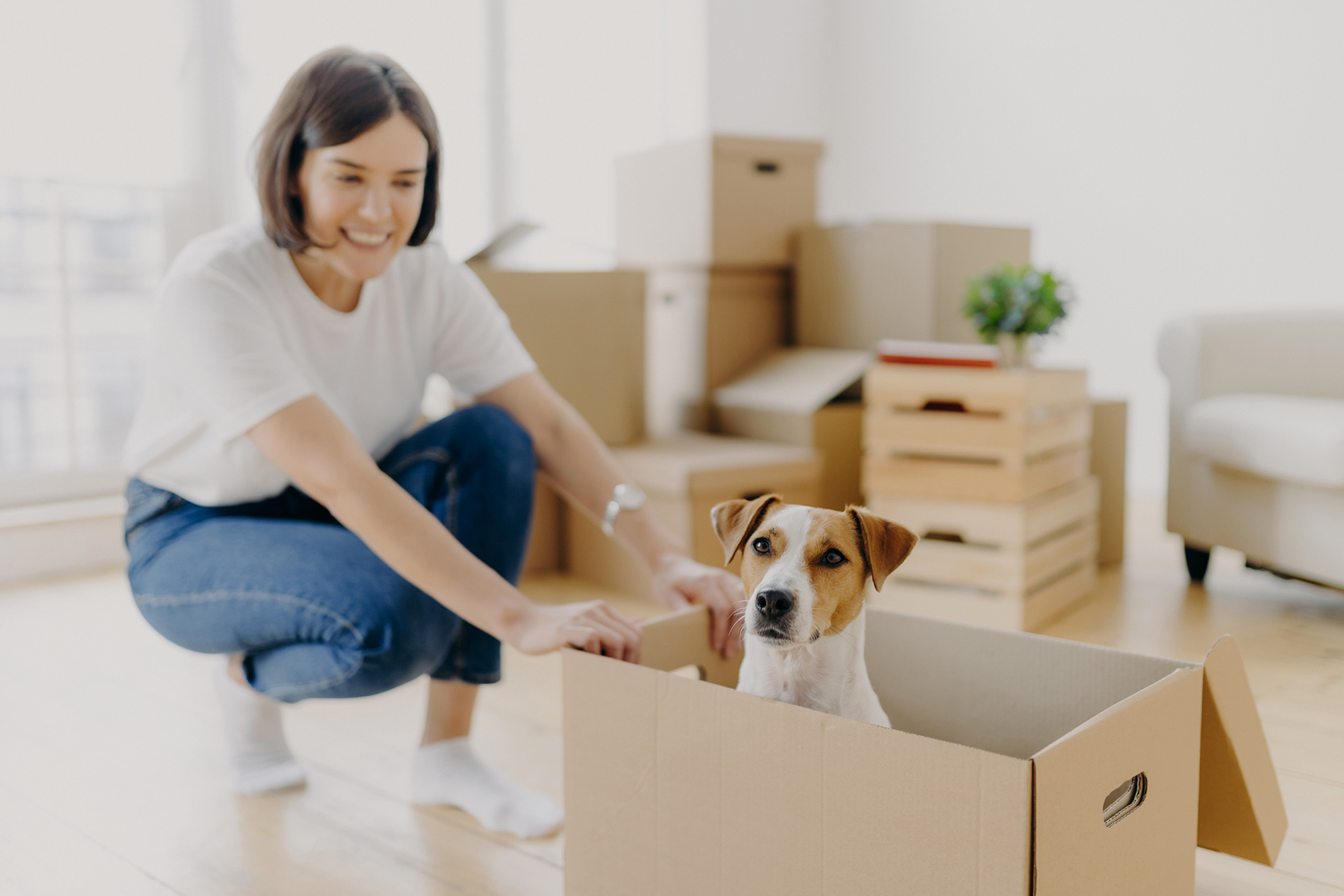 Pet in rental properties